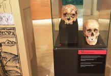 """Exposició """"Ossos. Un viatge a l'època medieval de la mà de l'antropologia física"""""""
